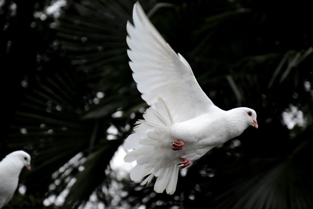 der Heilige Geist