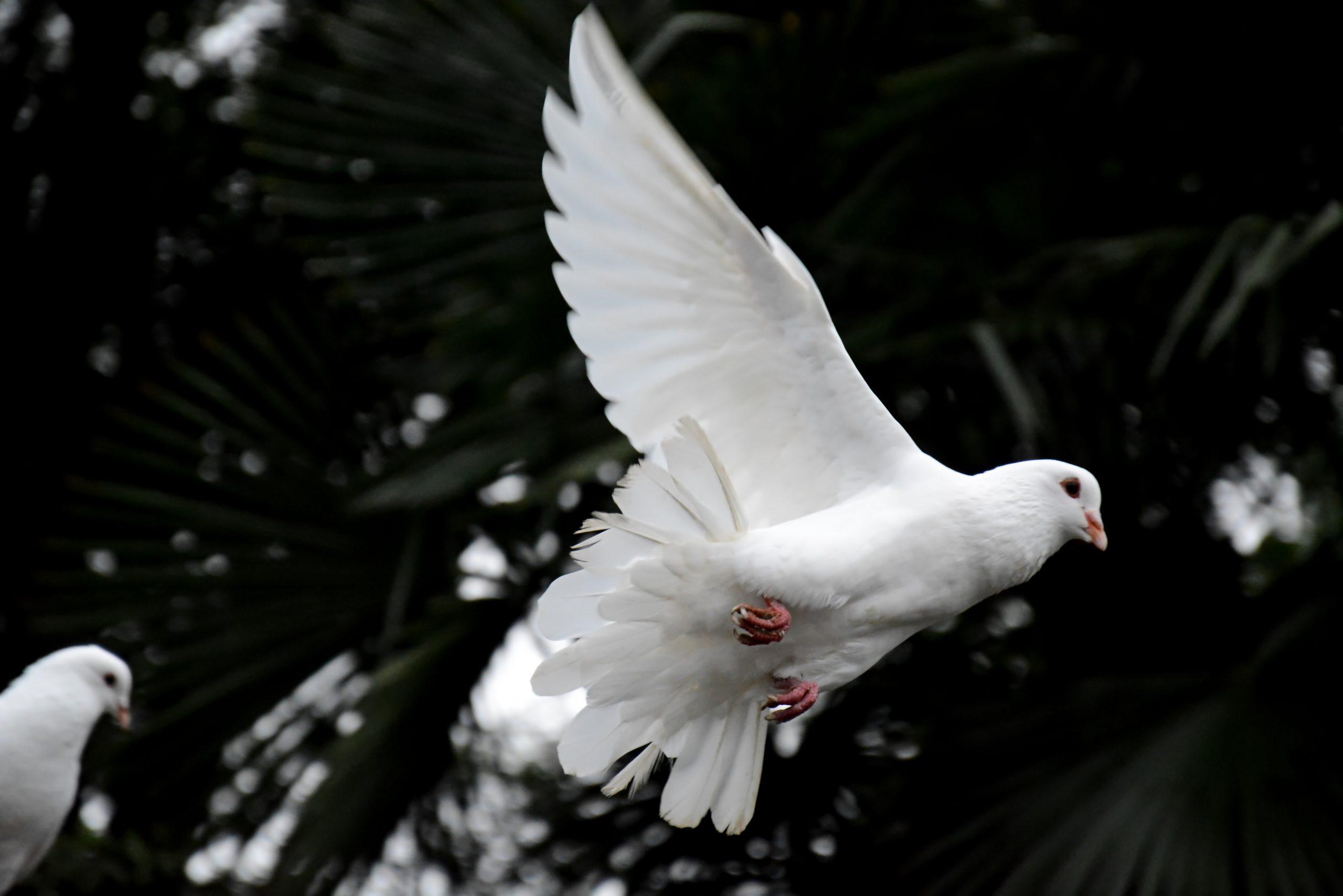 Der Heilige Geist als Gabe Gottes