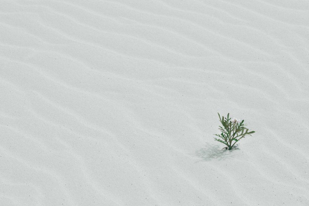 Die Hauptzutat für persönliches Wachstum