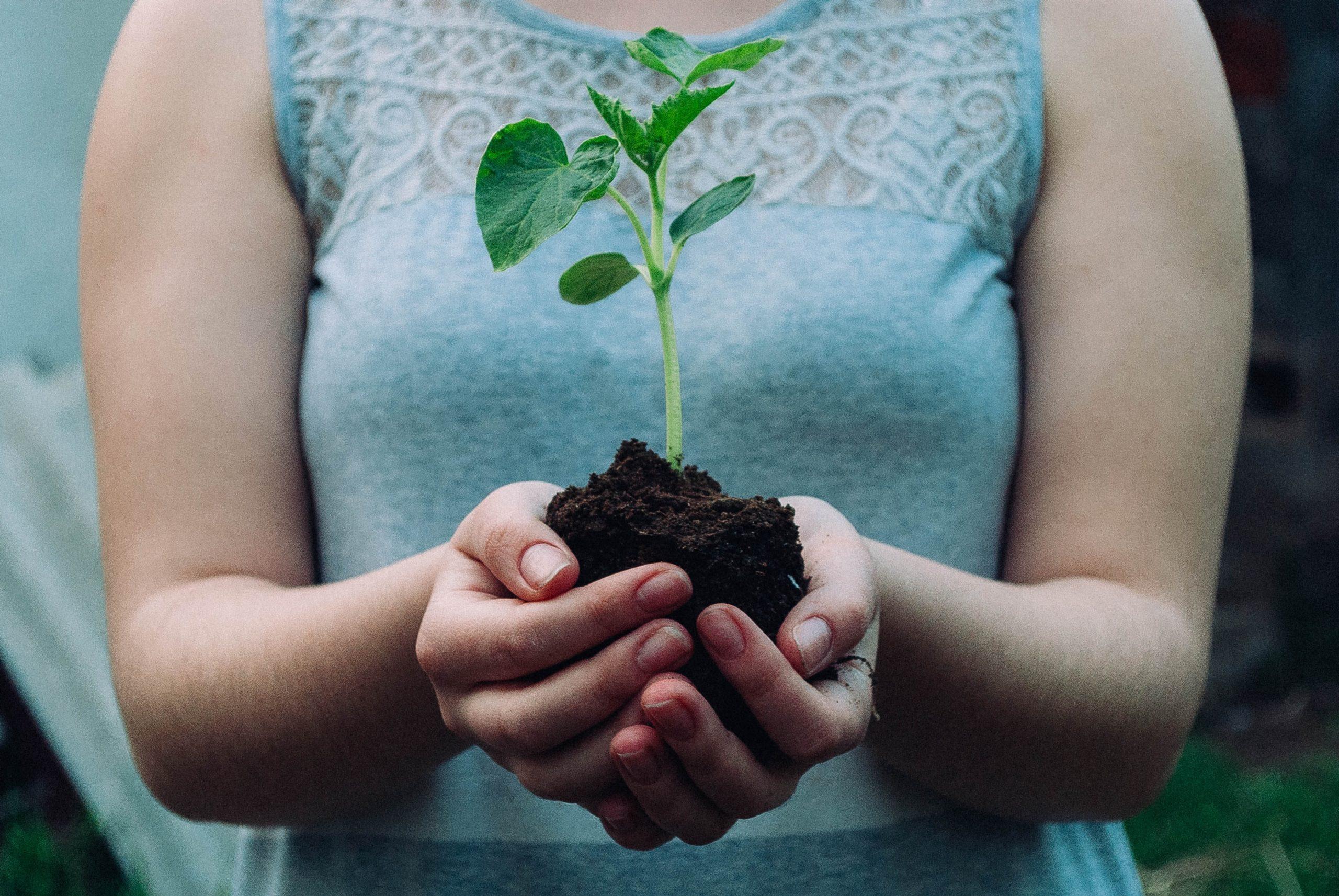 Treue und geistliches Wachstum